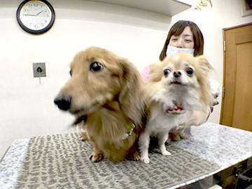 病院 溝口 動物